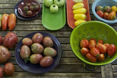 Saving-Tomato-Seeds-1024x680